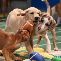 photos-puppy-bowl-x-kick-off-62b608567fe9ed50jpg-1e9f1868f1692845